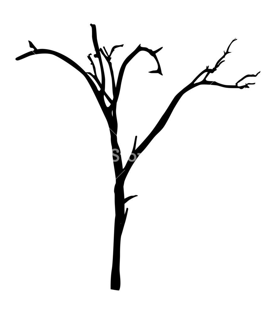 879x1000 Dead Tree Branches Shape Royalty Free Stock Image