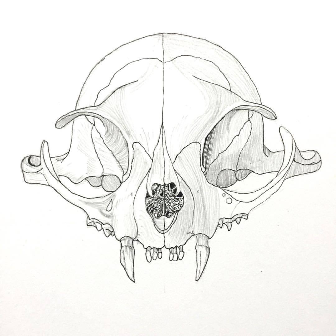 1080x1080 Vishnu Prasad Bat's Skull