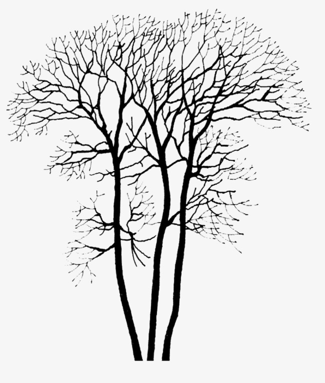 650x767 Deciduous Tree Png Image, Branches, Trunk, Trees Png Image