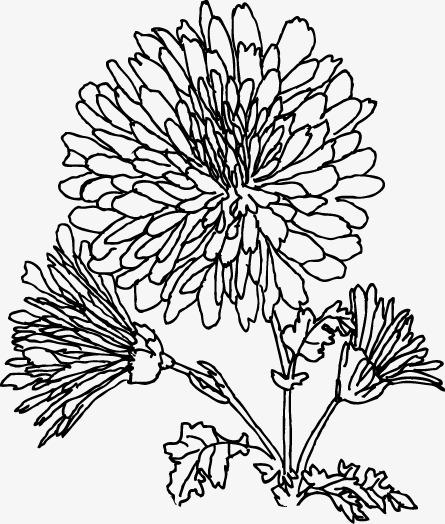 445x524 Chrysanthemum Line Drawing, Classical, Decorative Border Png Image