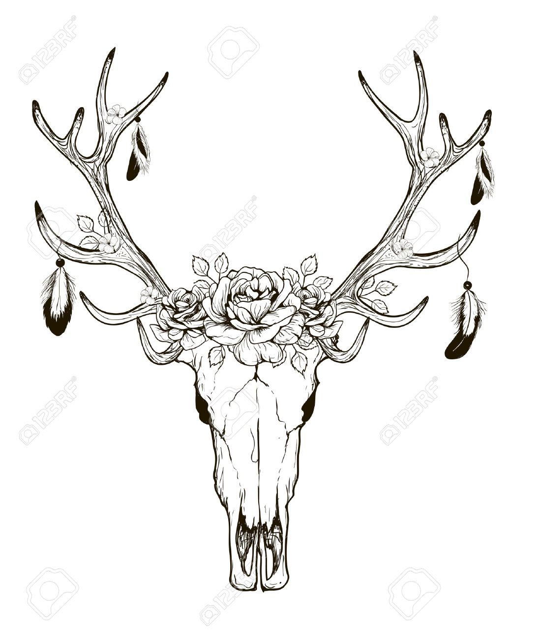 1102x1300 Deer Skull Black White Sketch, Illustrations Drawing Cow Skull