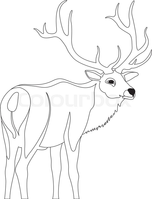 613x800 Deer Vector Illustration Line Drawing Stock Vector Colourbox