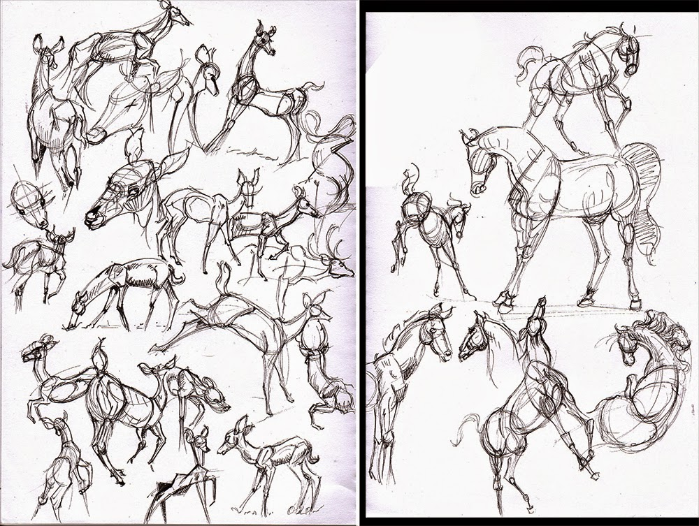 1000x753 Hamo's Art Blog Horse And Deer Anatomy Sketches