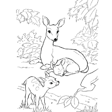 230x230 Top 20 Deer Coloring Pages For Your Little Ones