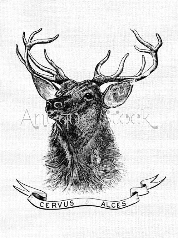 570x760 Deer Clipart