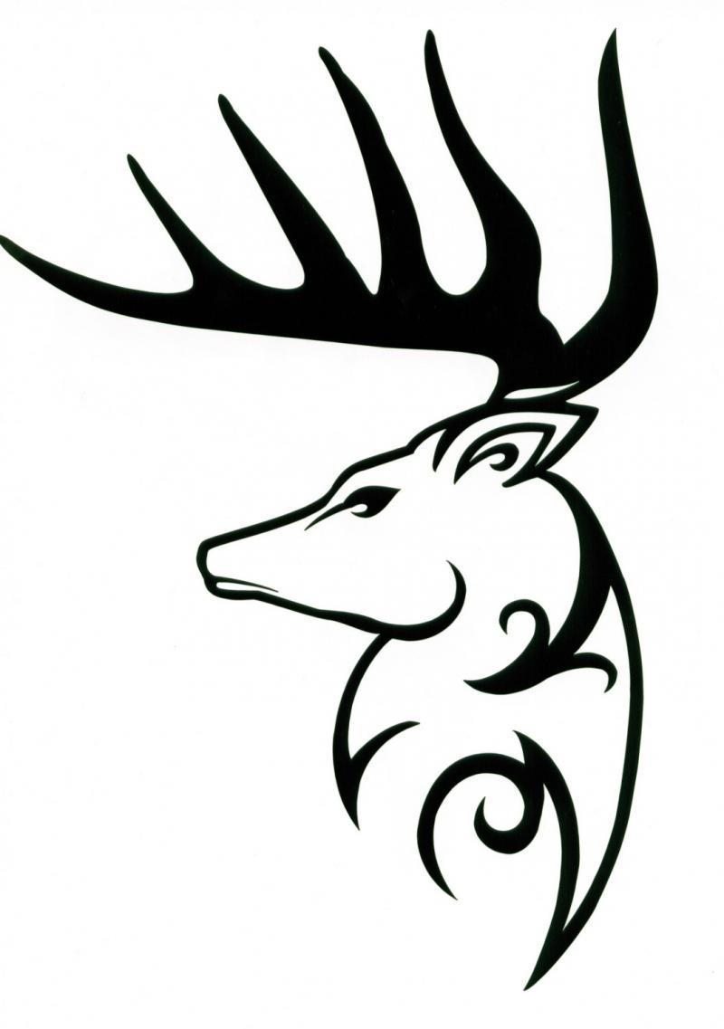 800x1137 Deer Tribal Drawings Deer Antler Drawings
