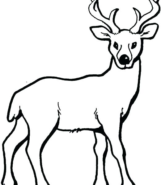 521x600 Excellent Deer Coloring Pageline Picture Draw Pages Fresh