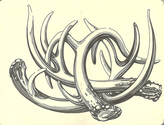 640x490 A Pair Amp A Half Of Deer Antlers Antlers, Art Reference And Doodles