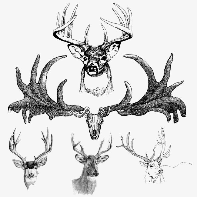650x650 Antlers, Hand Painted Deer Antlers, Hand Painted, Deer Png Image