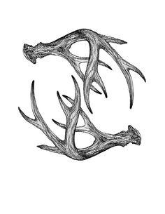 236x305 Deer Antler Sketch
