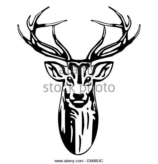 520x540 Deer Antlers Black White Stock Photos Amp Deer Antlers Black