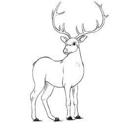 250x250 Deer Drawing, Pencil, Sketch, Colorful, Realistic Art Images