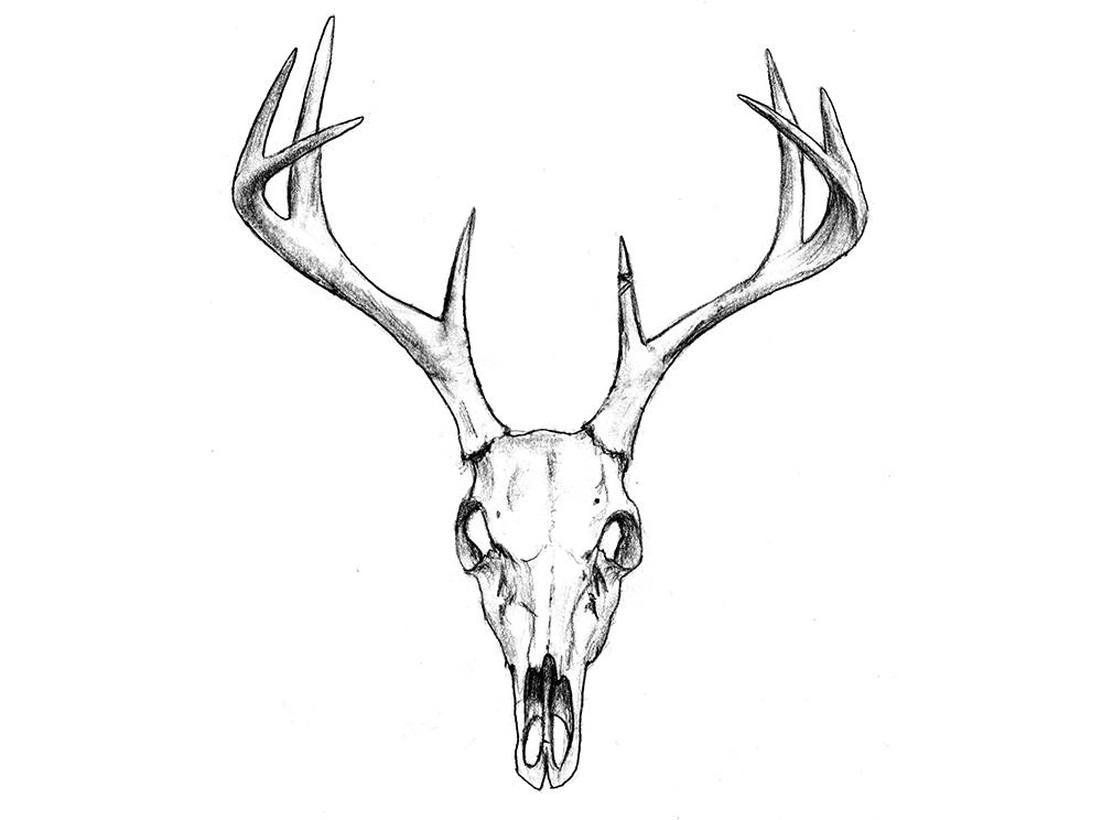 1000x744 Deer Skull Drawing With Flowers