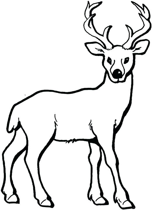 521x720 Free Deer Coloring Pages Deer Coloring Page Add Pipe Cleaner