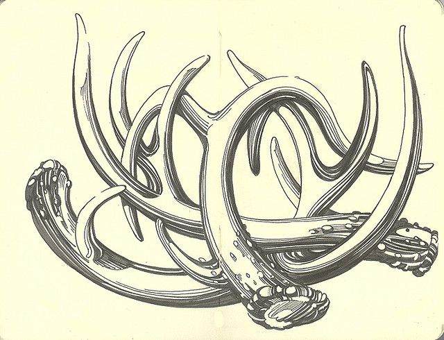 640x490 The Best Antler Drawing Ideas On Deer Drawing
