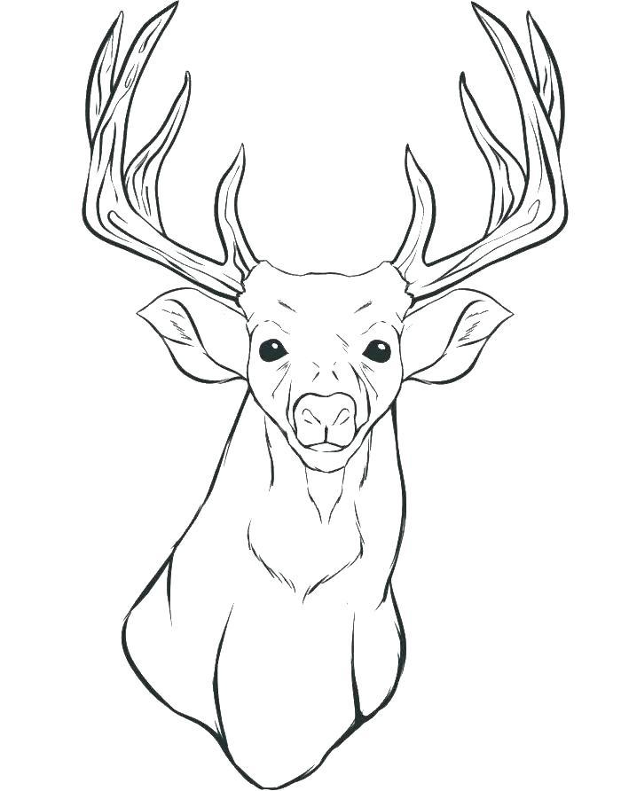 Deer Antlers Drawing At Getdrawings Com Free For Personal Use Deer