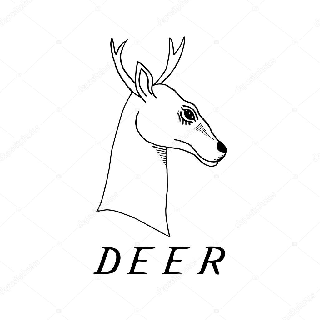 1024x1024 Hand Draw A Deer Head With Antlers Stock Vector