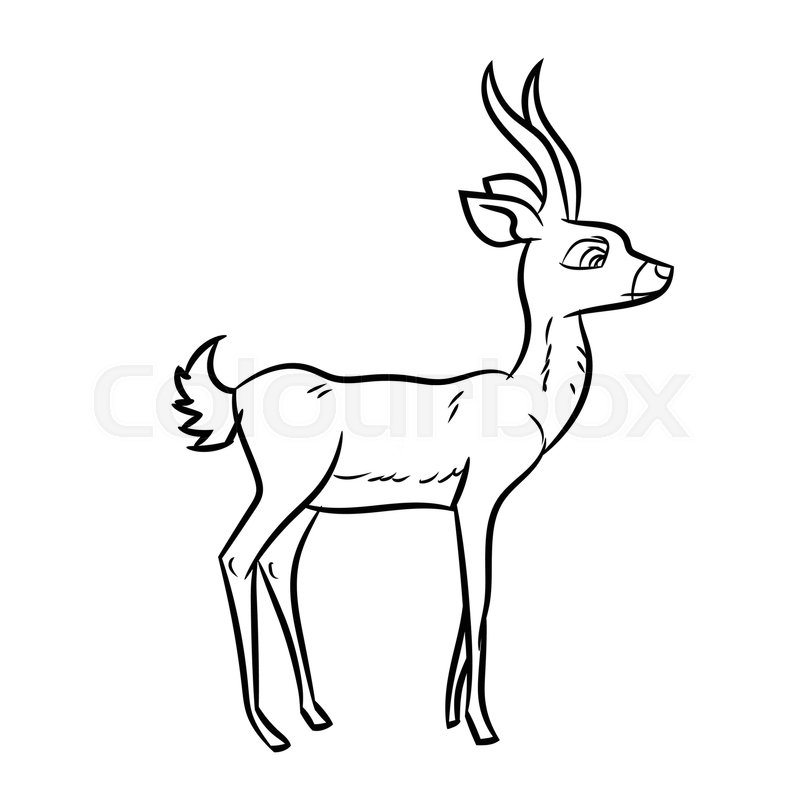 800x800 Hand Drawn Sketch Of Antelope Isolated, Black And White Cartoon