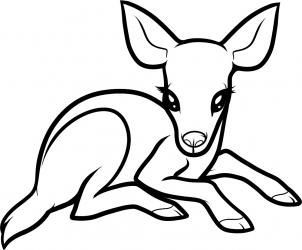 302x250 How To Draw A Baby Deer, Baby Deer Step 6 Crafts Drawing