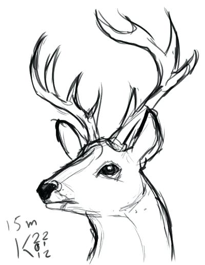 400x517 deer head coloring pages deer head outline printable sketch