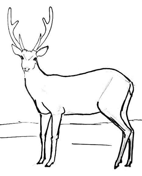 deer drawing at free for personal use deer drawing of your choice. Black Bedroom Furniture Sets. Home Design Ideas