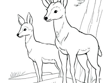 440x330 Deer Coloring Pages Deer Ng Pages For Kids Deer Ng Picture