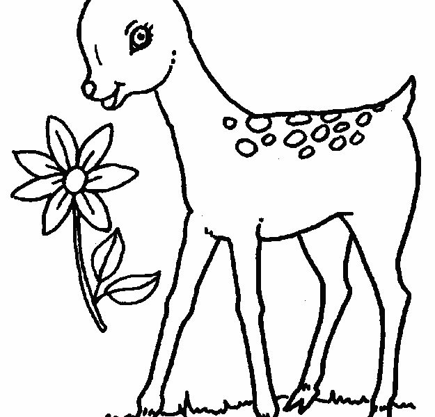 625x600 Coloring Picture Of Deer Deer Coloring Page Animals Town Free Deer