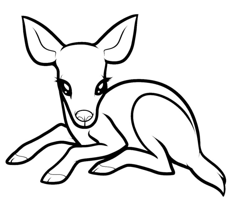 Delightful 750x659 Classy Design Ideas Coloring Pages Draw A Deer Baby Baby Deer