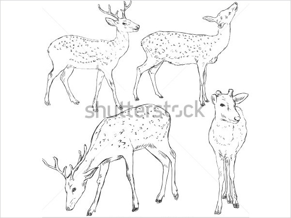 Deer Drawing Pics
