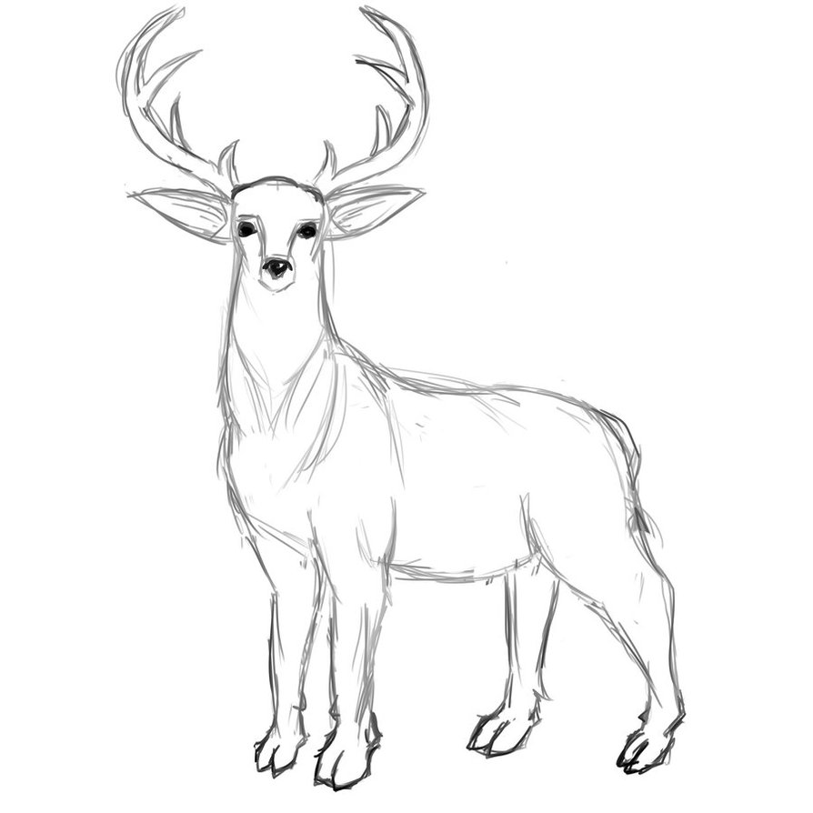 894x894 Deer Sketch By Ilartist