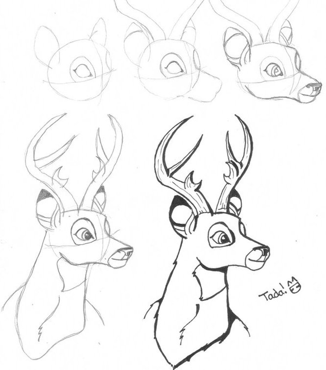 666x755 Drawing A Deer (Bambi)