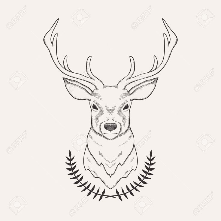 736x736 Gallery Deer Drawing Images,