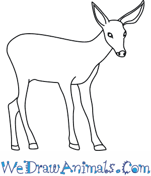 300x350 How To Draw A Mule Deer