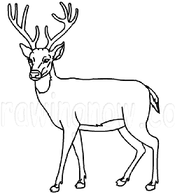 250x278 How To Draw A Deer Drawing Lesson Before Long