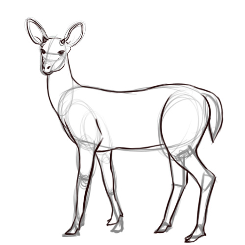 500x500 Pencil Sketches And Drawings How To Draw A Deer