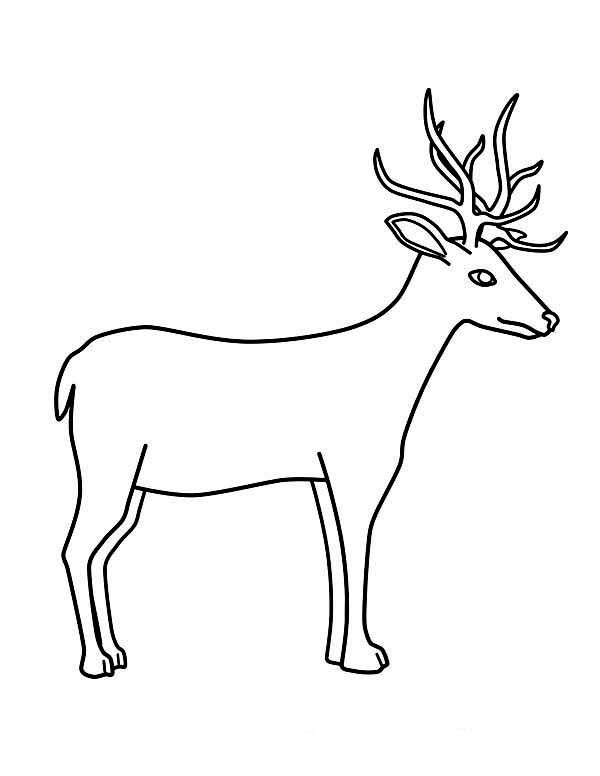 Deer Drawing Step By Step