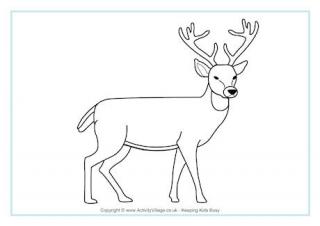 320x226 Deer For Kids