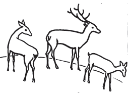 254x184 How To Draw Deer Step By Step Drawing Tutorial
