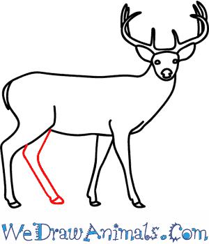 300x350 How To Draw A Buck Deer