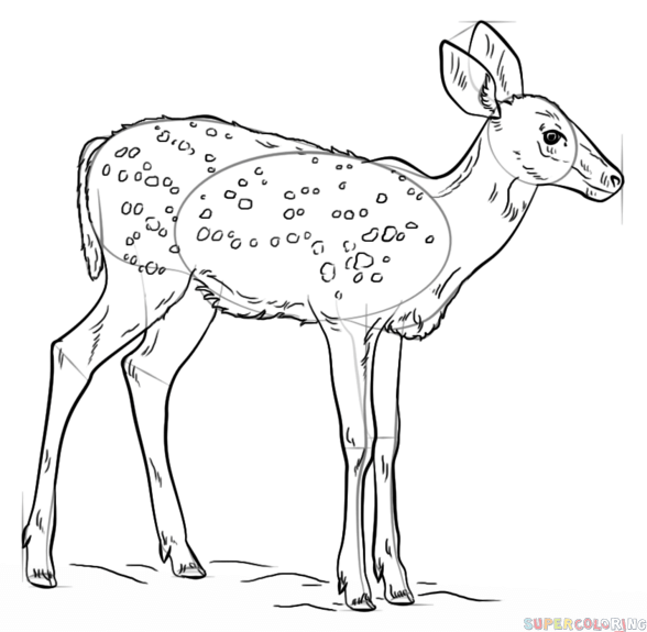 588x575 How To Draw A Fawn Step By Step Drawing Tutorials