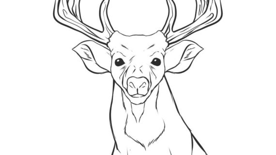 570x320 A Drawing Of A Deer How To Draw A Deer Head, Step By Step, Forest