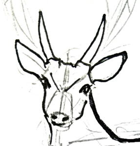 287x300 How To Draw A Deer