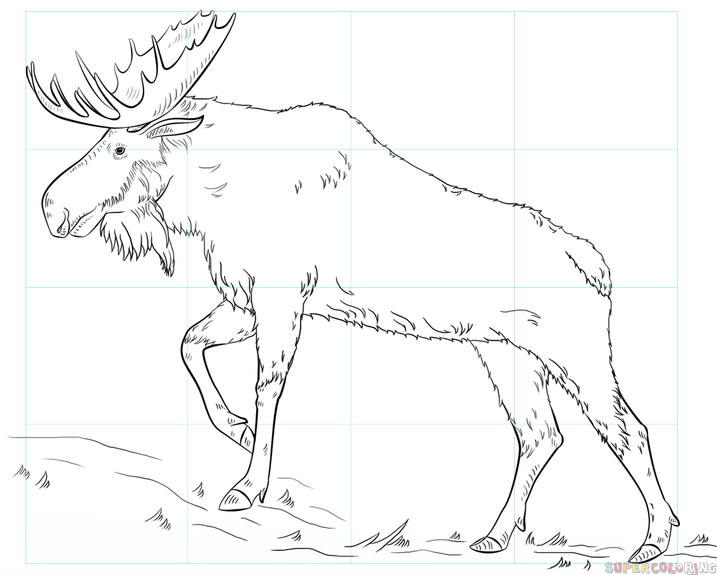 717x575 How To Draw A Moose Step By Step Drawing Tutorials
