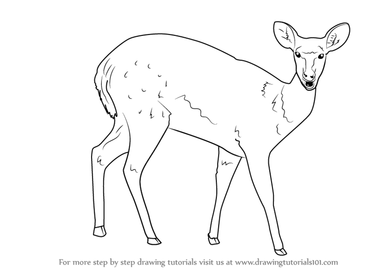 800x565 Learn How To Draw A Bushbuck (Wild Animals) Step By Step Drawing