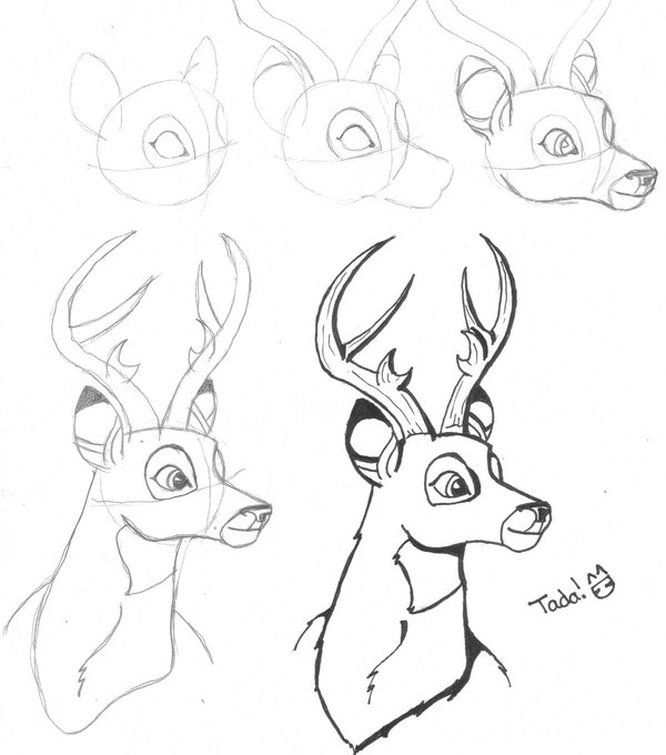 666x755 Buck Step By Step Drawing How To Draw A Deer Step By Step