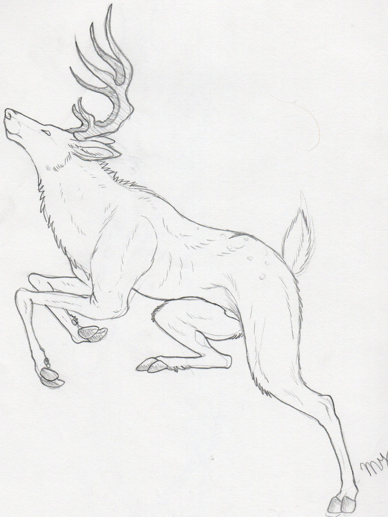 774x1032 Deer Sketch By Suenta Deathgod