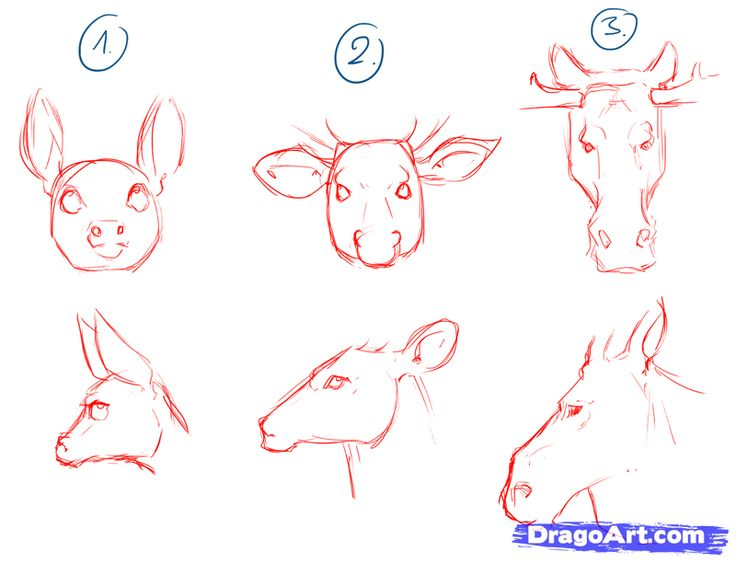 736x563 Drawing Tutorial How To Draw A Deer Step By Step. Como Dibujar