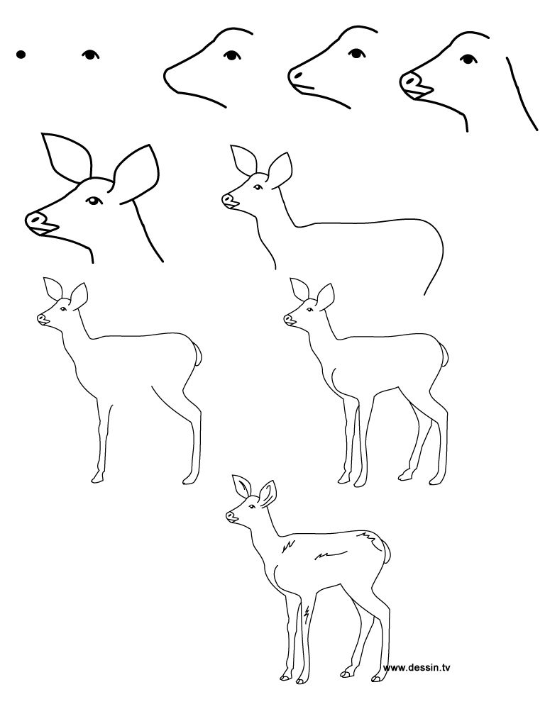768x1024 How To Draw Baby Animals Step By Step Learn How To Draw A Fawn