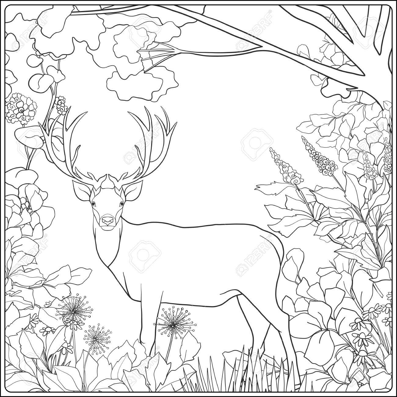 1300x1300 Coloring Page With Deer In Forest. Coloring Book For Adult