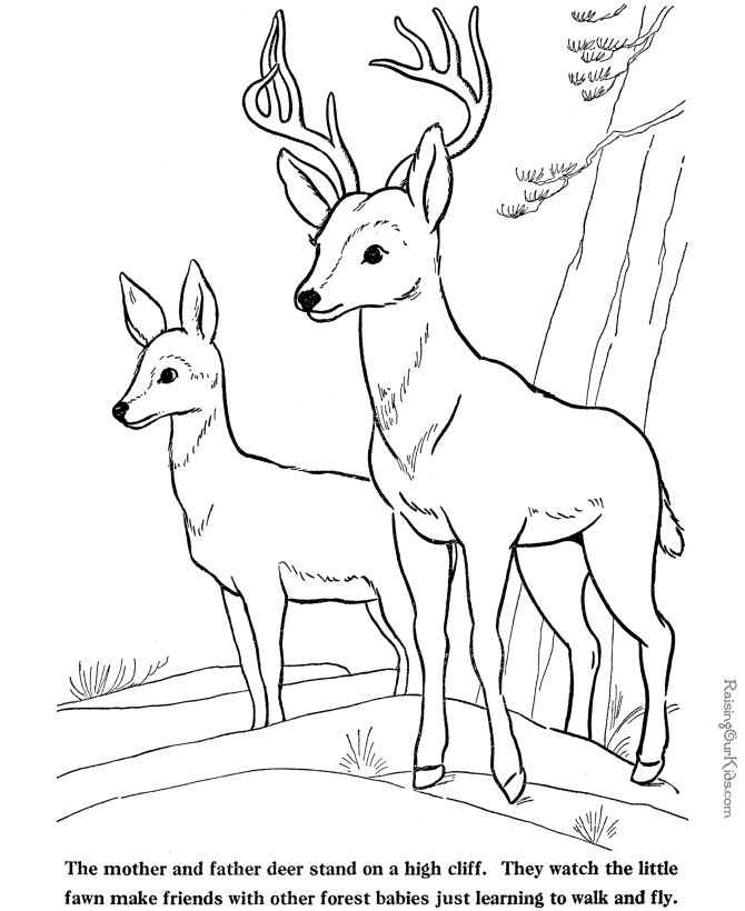deer drinking water drawing at getdrawings com free for personal